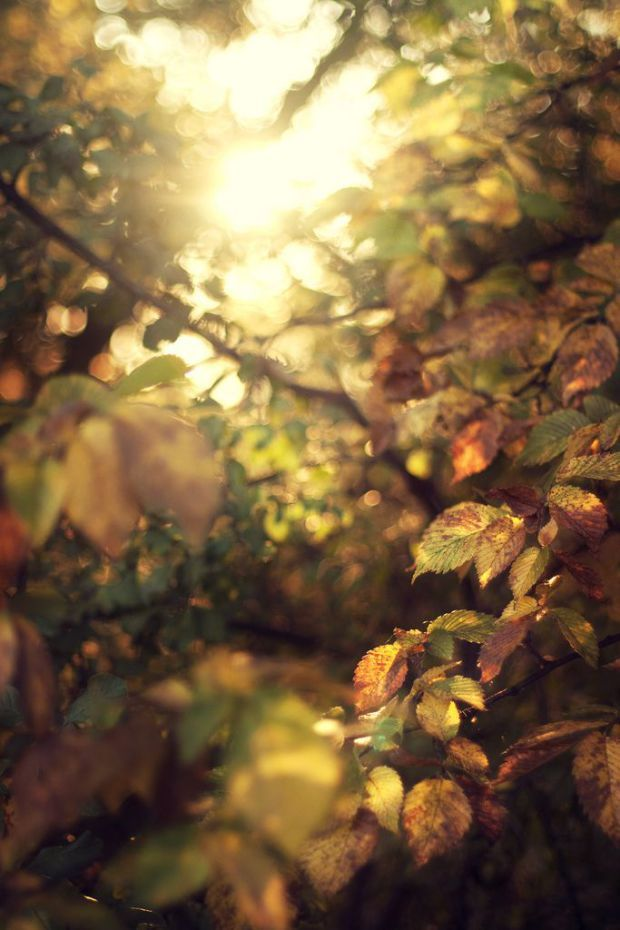 golden leaves_dappled light