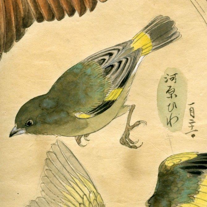 Birds from a Japanese Meiji Era Sketchbook