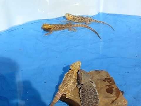 17+ Swimming dragons ideas