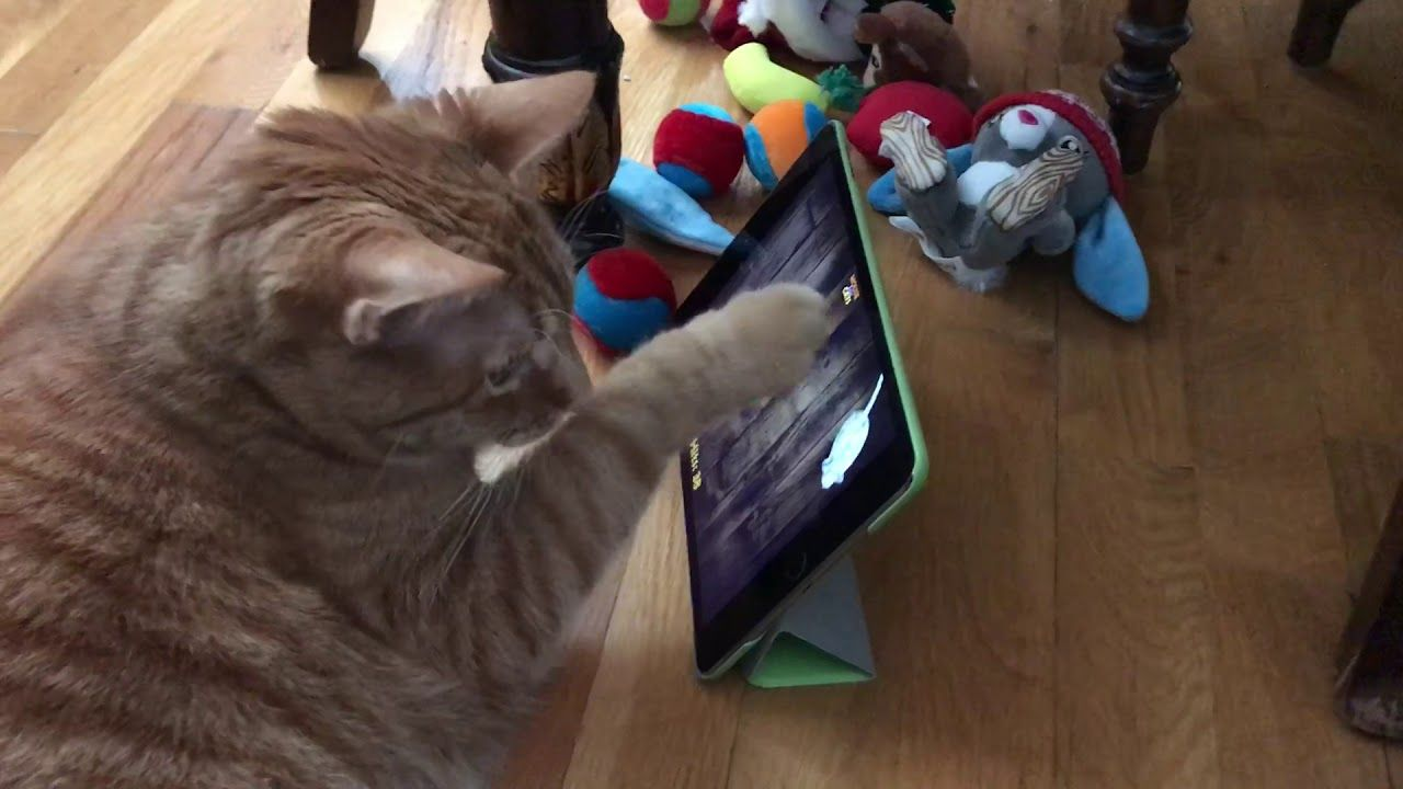 Snuggles The Cat Playing With Ipad Mouse For Cats App Cat App Cat Playing Cat Mouse