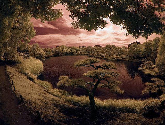 Infrared Lake View In Kiyosumi Garden by aeschylus18917, via Flickr