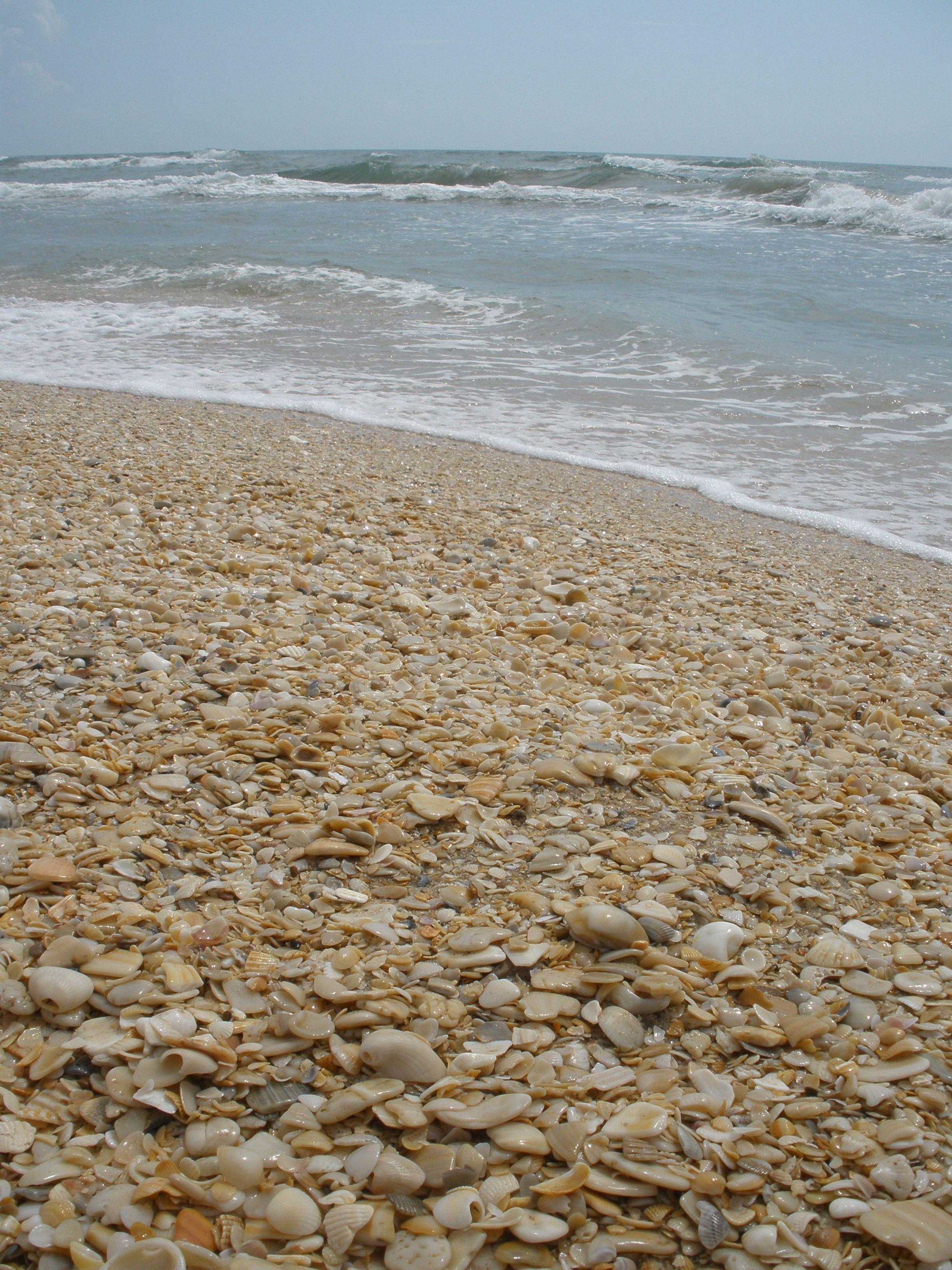 Big Shell Beach Padre Island National Seashore 4x4 Only I Took
