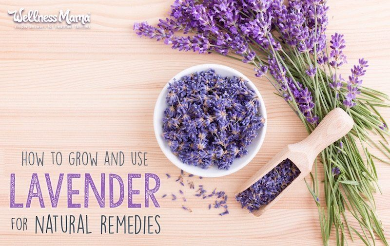 Uses, Benefits & How to Grow It How to Use Lavender (Grow it, Make Natural RemediesHow to Use Lavender (Grow it, Make Natural Remedies