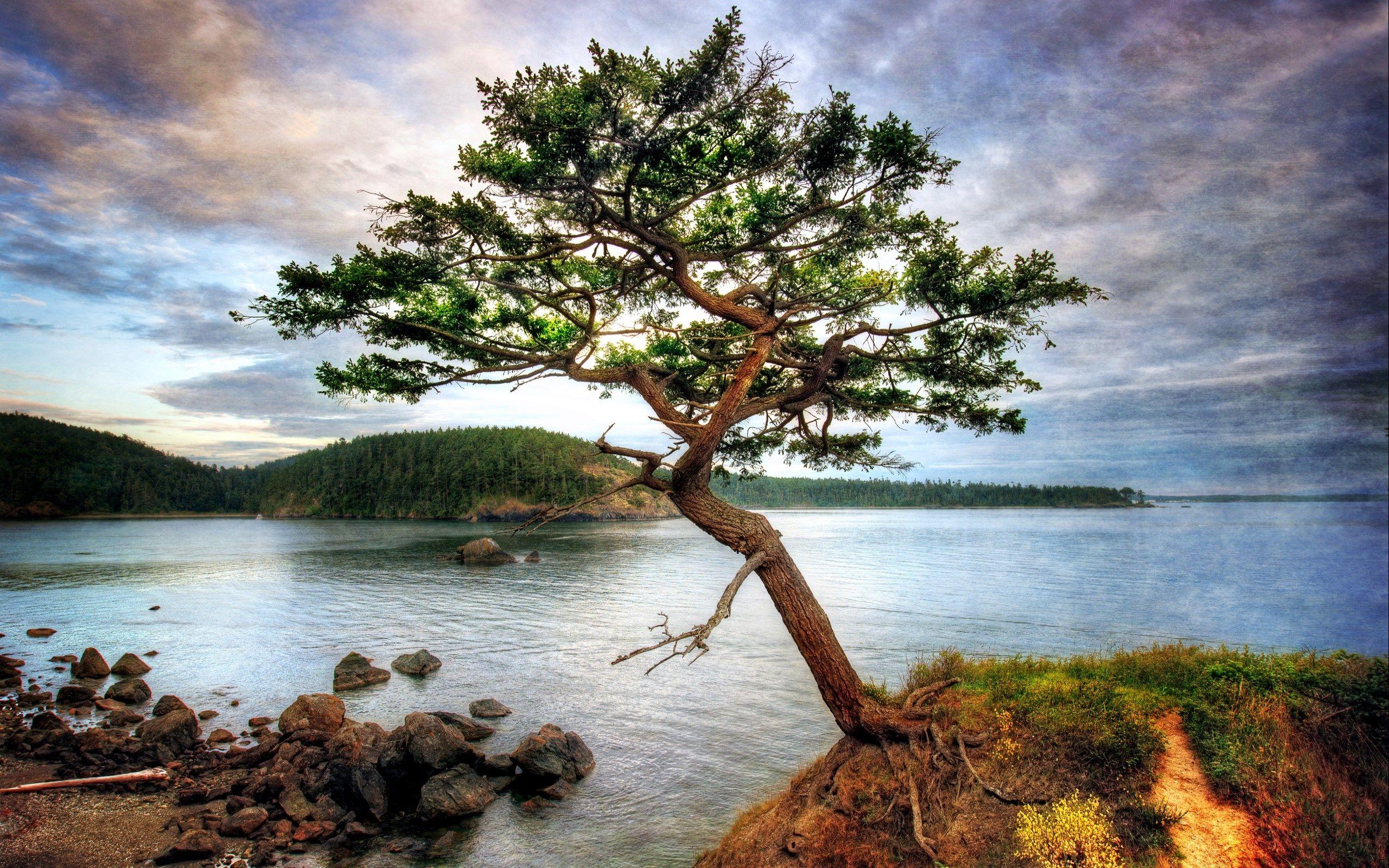2560x1600 Free screensaver tree