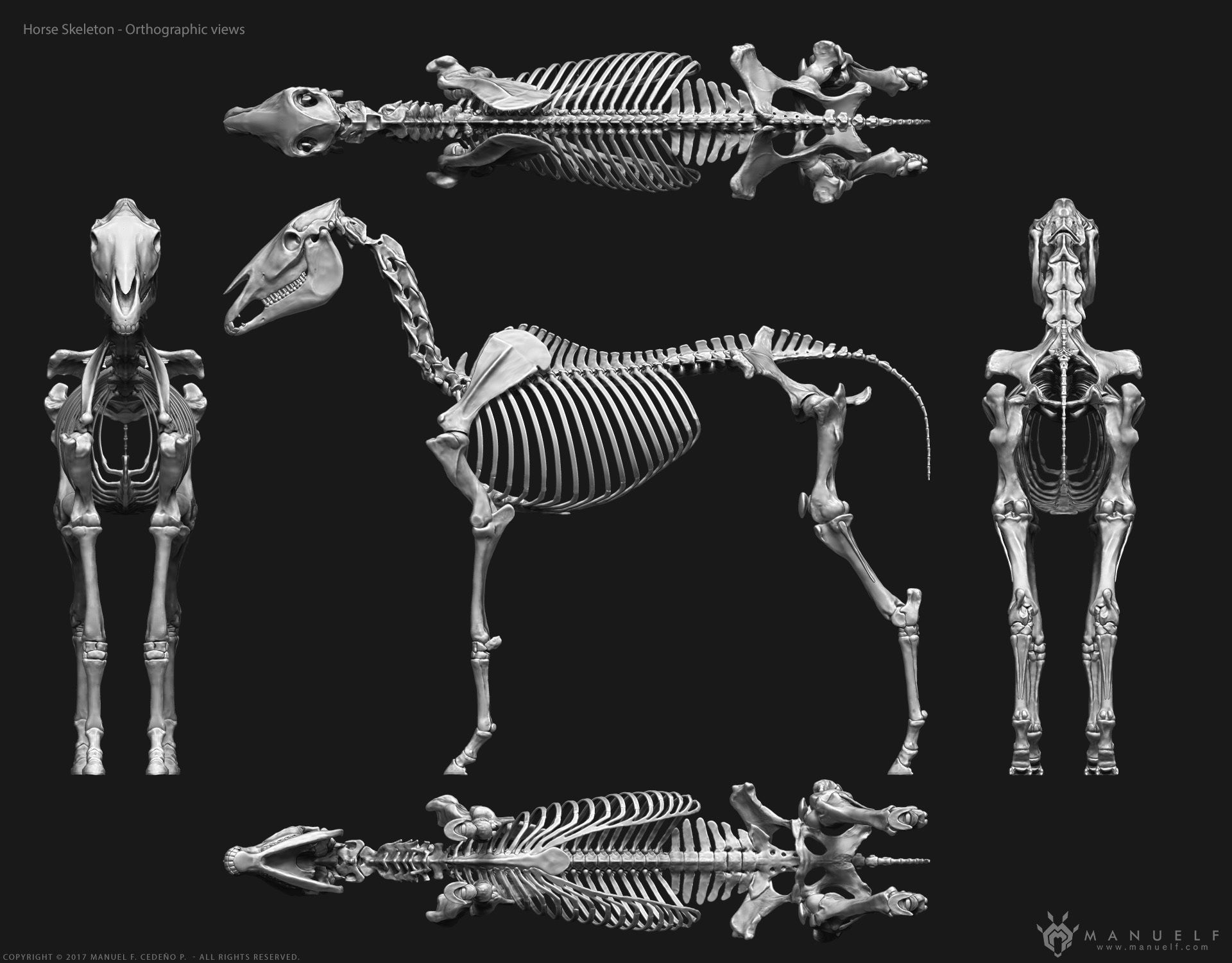 3d horse skeleton 3d model obj stl ztl mtl 3   animals