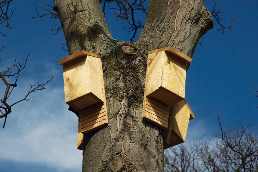 Bat Houses and More Bat Facts House exterior, Build a