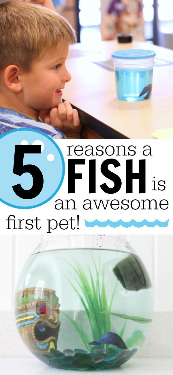 5 Reasons a Fish is an Awesome First Pet for Your Child!  (AD)