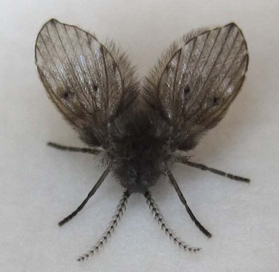 10 Astonishing Small Black Flies In Bathroom Ideas Picture