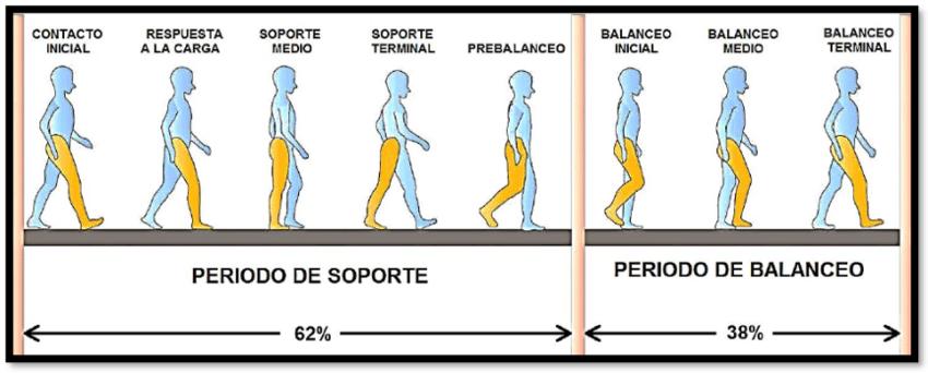 Ciclo de Marcha y sus Fases. | fisio | Pinterest