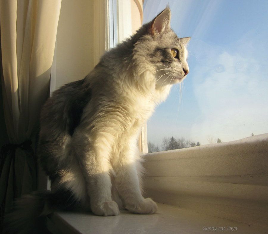 Sunny cat by ~Findhoem on deviantART