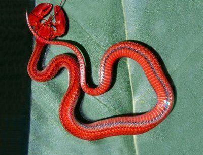 Lobster-snake hybrid