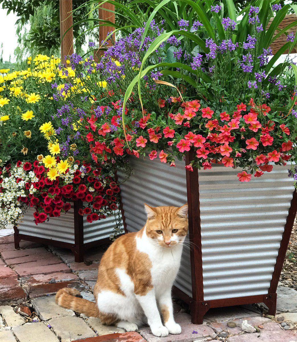 Laura LeBoutillier (GardenAnswer) Twitter Summer