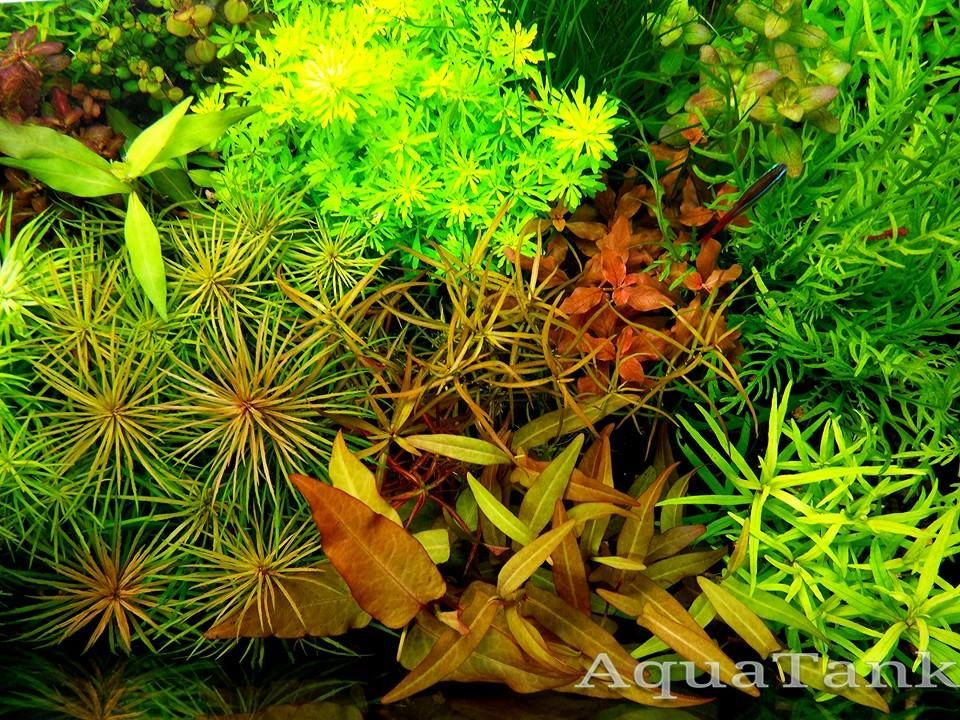 Incredible Aquascaping With Rare Plants Aquatic Plants Plants Aquascaping Plants