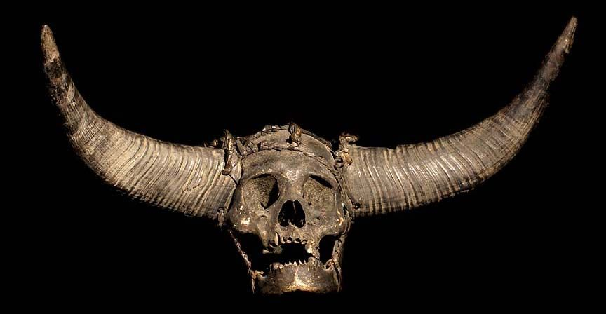 NAGA TRIBE: HEAD HUNTING HUMAN TROPHY SKULL HUMAN SKULL ... Human With Horns