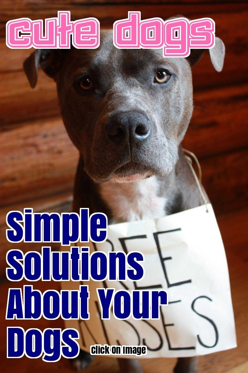 Fix Your Problems Related To Dogs Thanks To This Article Dogs
