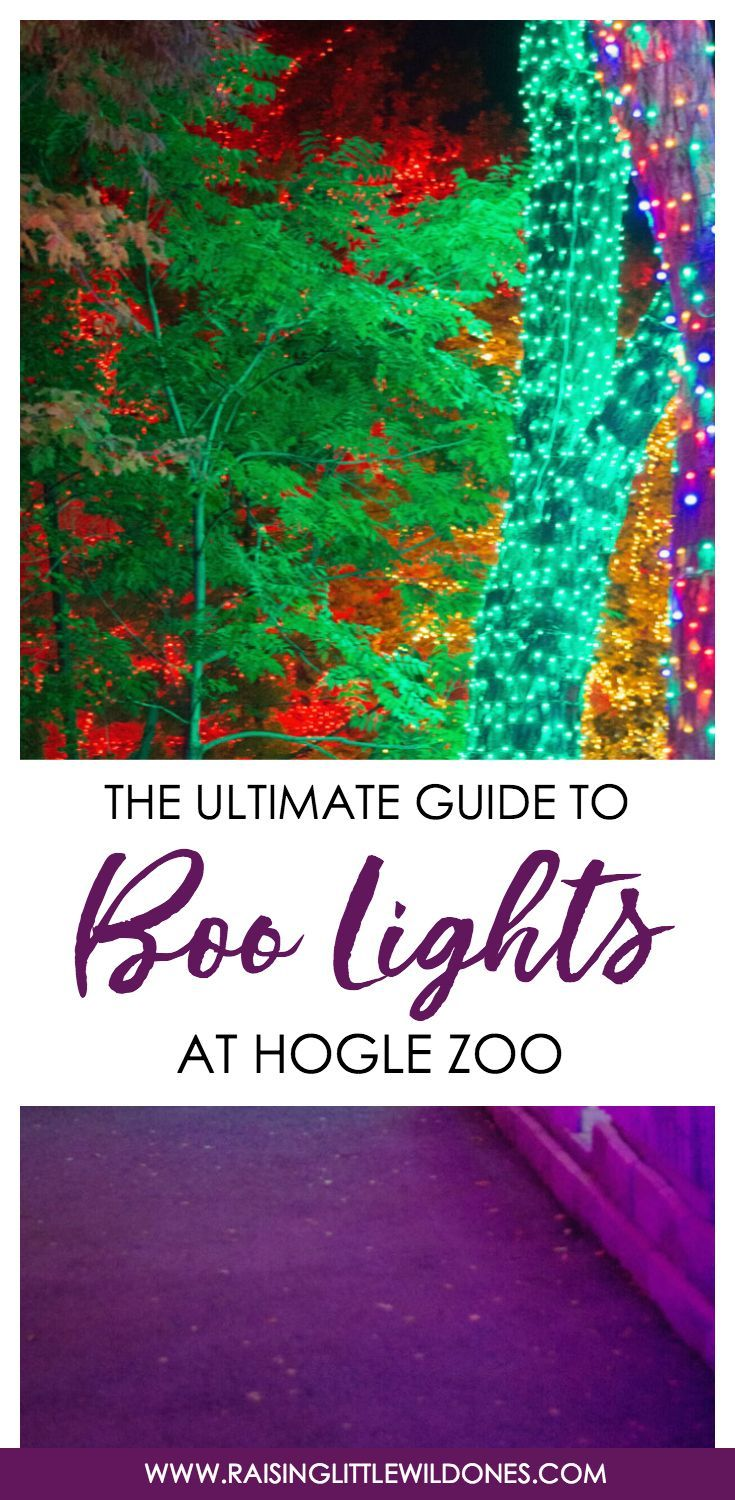 The Ultimate Guide to Boo Lights at the Hogle Zoo