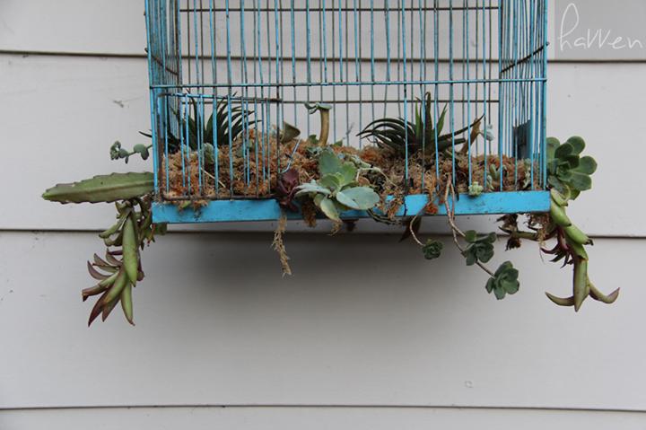 Guest post from Havven How to create a DIY Succulent Birdcage Garden http://ift.tt/29bONIz - http://ift.tt/1HQJd81
