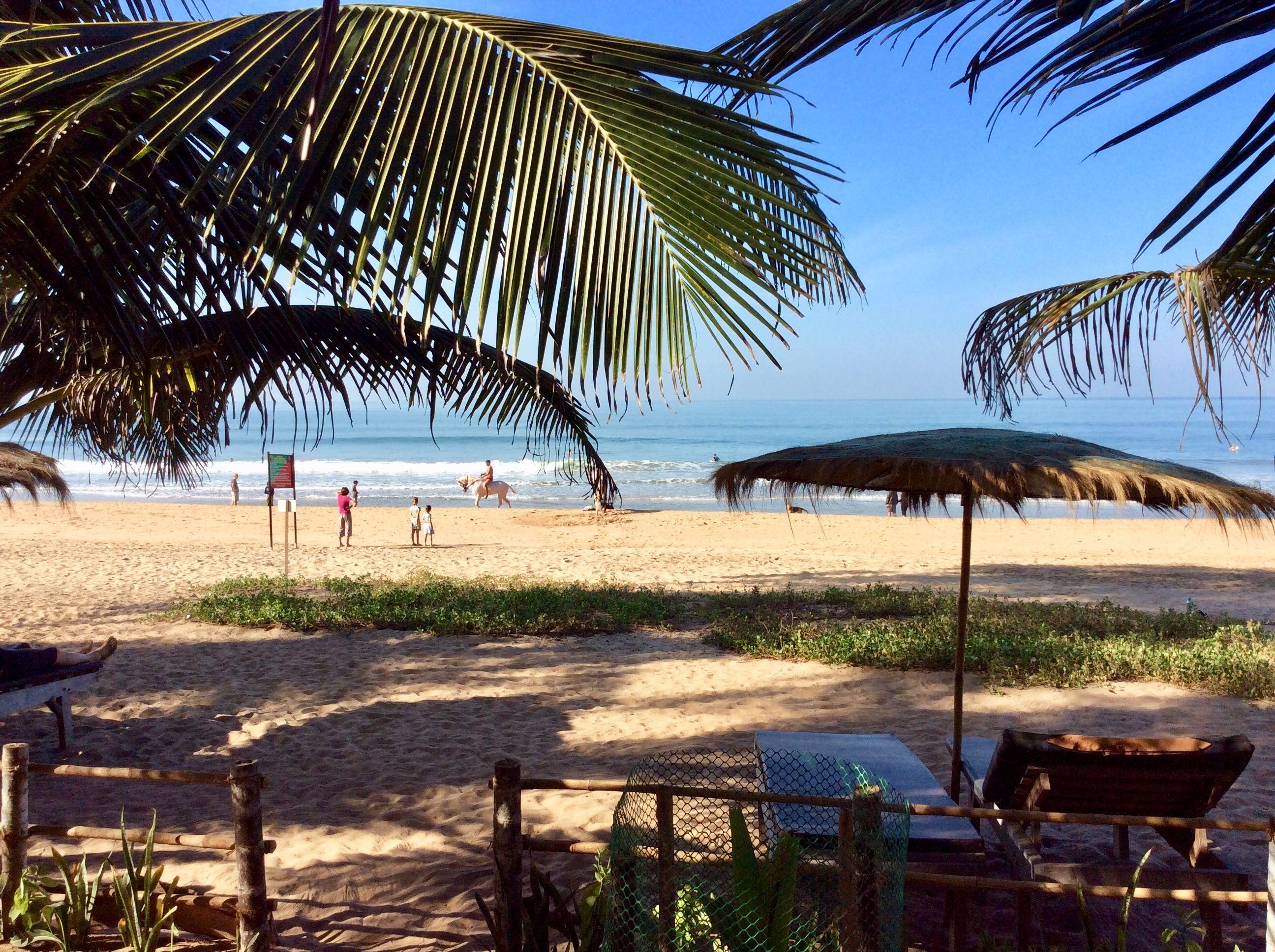 Agonda Beach Goa Beach Palm Trees Sea Shells