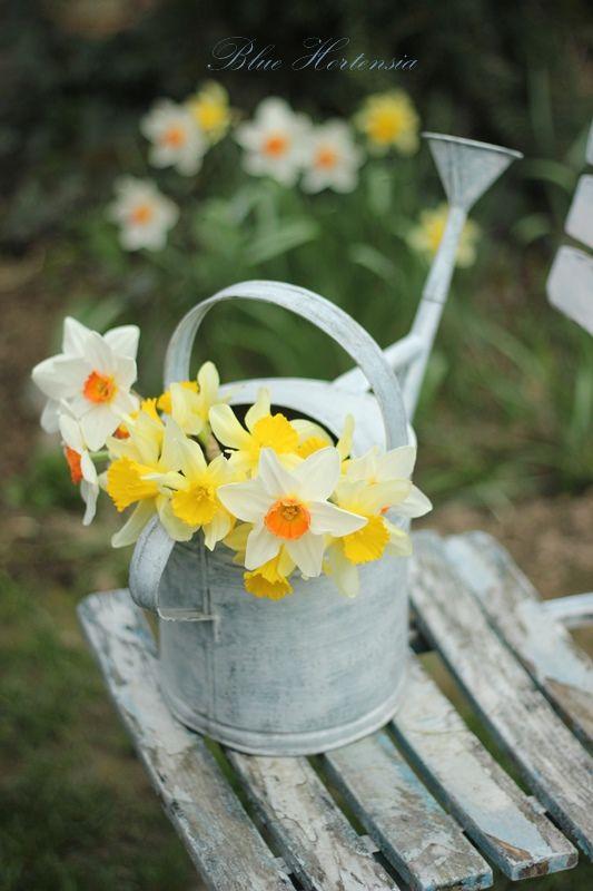 **cottage on daffodil lane .. X ღɱɧღ ||