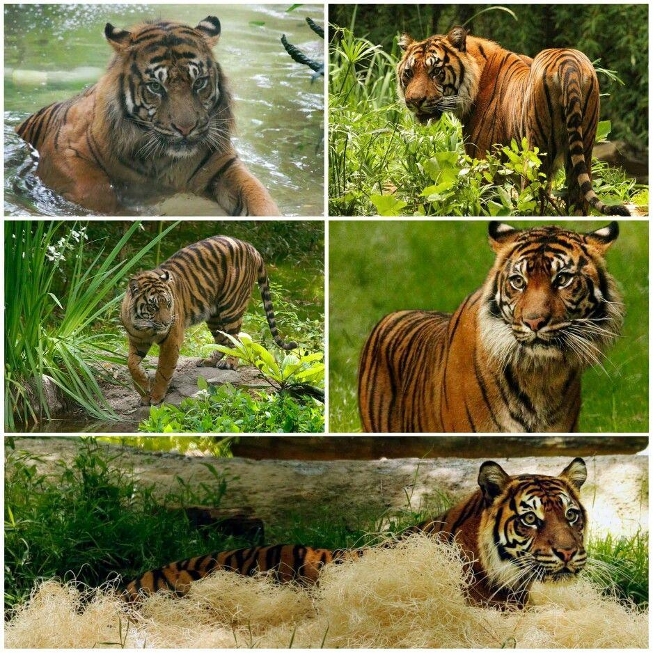 Dallas Zoo Dallas zoo, Animals