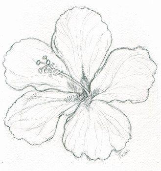 R sultats de recherche d 39 images pour dessin de fleur - Dessin d hibiscus ...