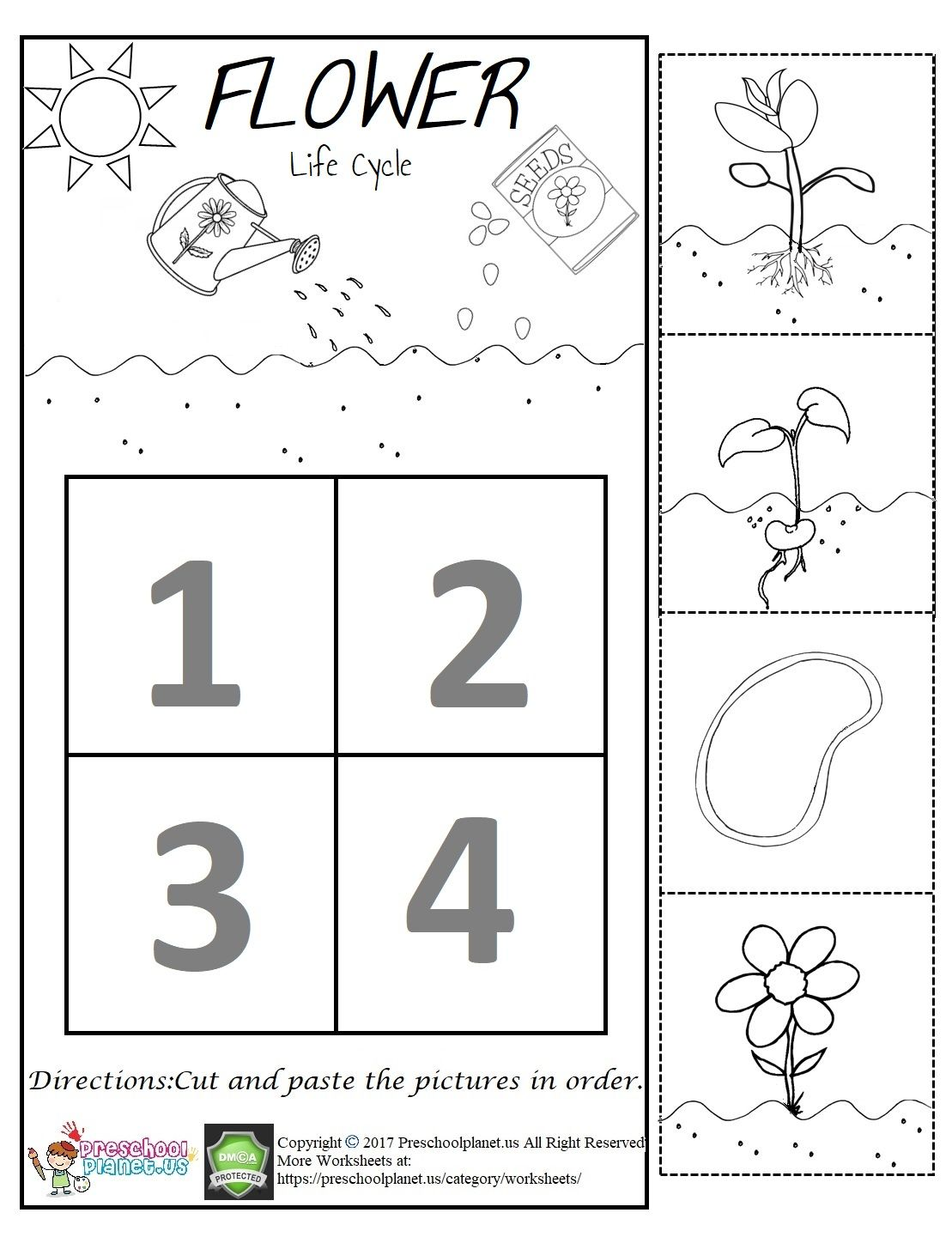 Flower Life Cycle Worksheet Worksheet For Kids Life