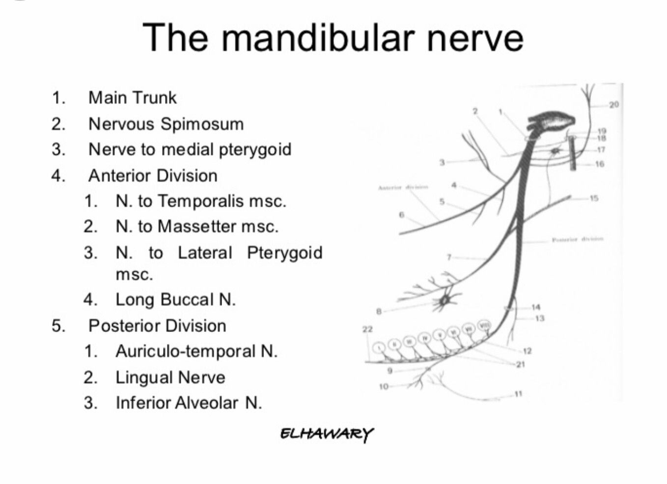 Mandibular nerve | Head & Neck Anatomy | Pinterest