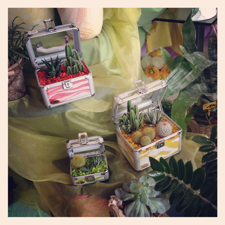 Succulent o piantine grasse in una simpatica confezione valigetta scrigno