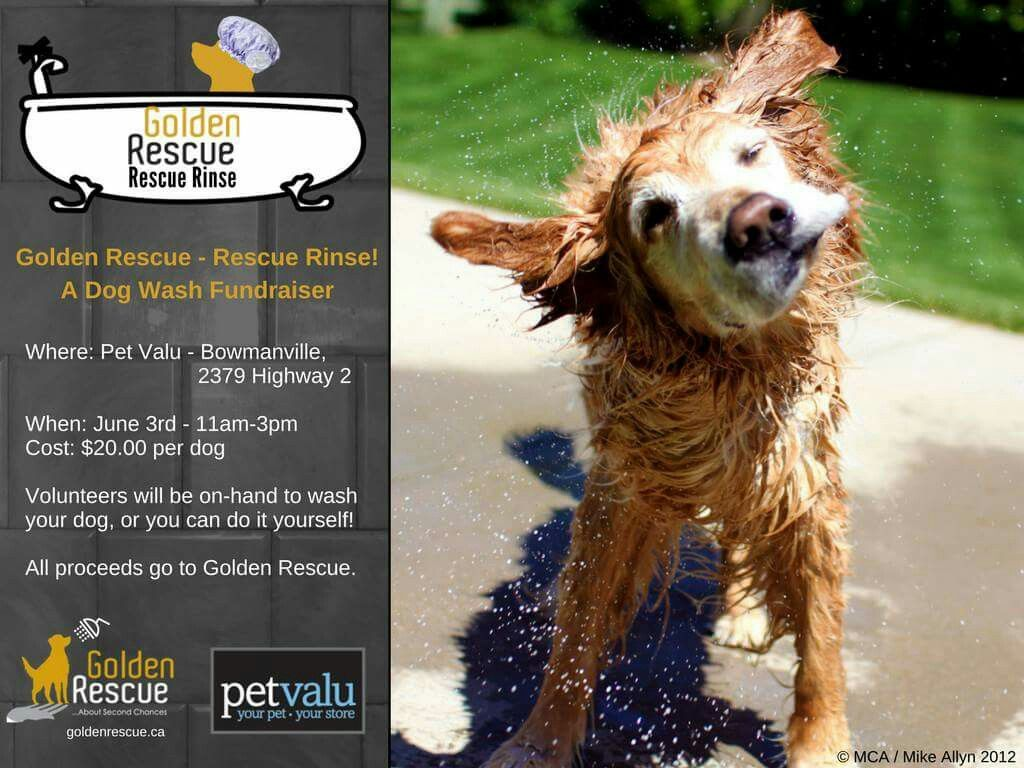 Join us for our rescue rinse dog wash fundraiser golden rescue join us for our rescue rinse dog wash fundraiser golden rescue will be at the pet valu in bowmanville on june 3rd from 11am 3pm stop by and give your dog solutioingenieria Image collections