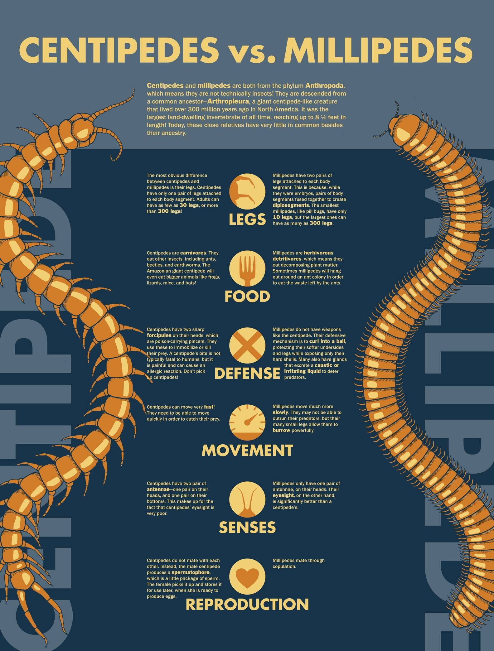 found this centipede vs millipede fact sheet since this got me curious about the differences. Black Bedroom Furniture Sets. Home Design Ideas