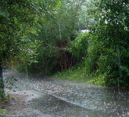Rainy Day Nature Rain Rainy Day Water Rain Pictures Rain Photography Autumn Rain
