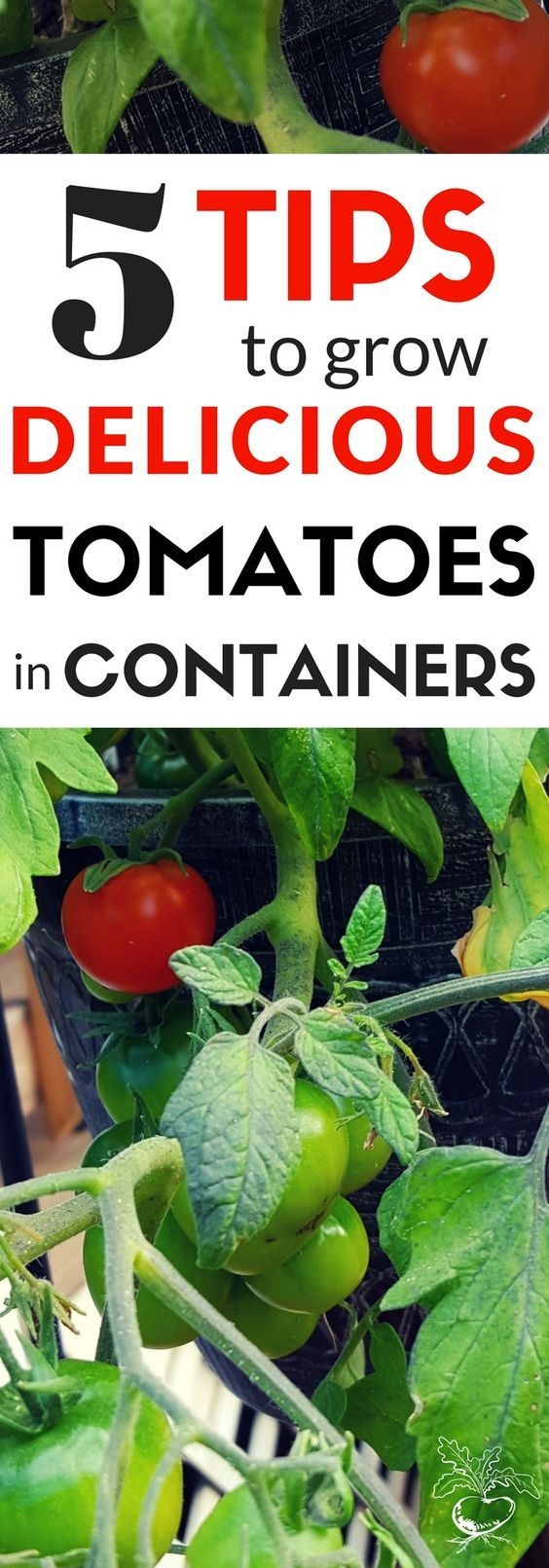 5 Tips To Grow Delicious Tomatoes In Containers 400 x 300