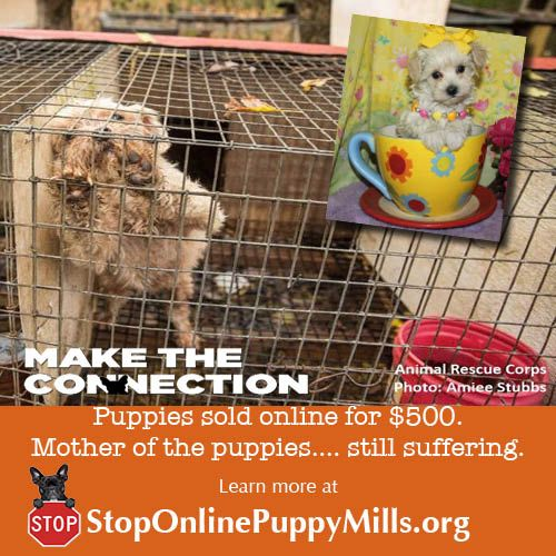 Do Fall For Puppy Mills Pretending To Be A Reputable Breeder Learn To Spot Their Lies At Stoponlinepuppymills Org