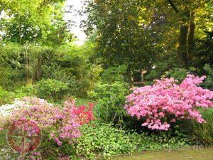 Schloss Augustusburg In Bruhl Duisburg Lokalkompass De Botanischer Garten Garten Duisburg