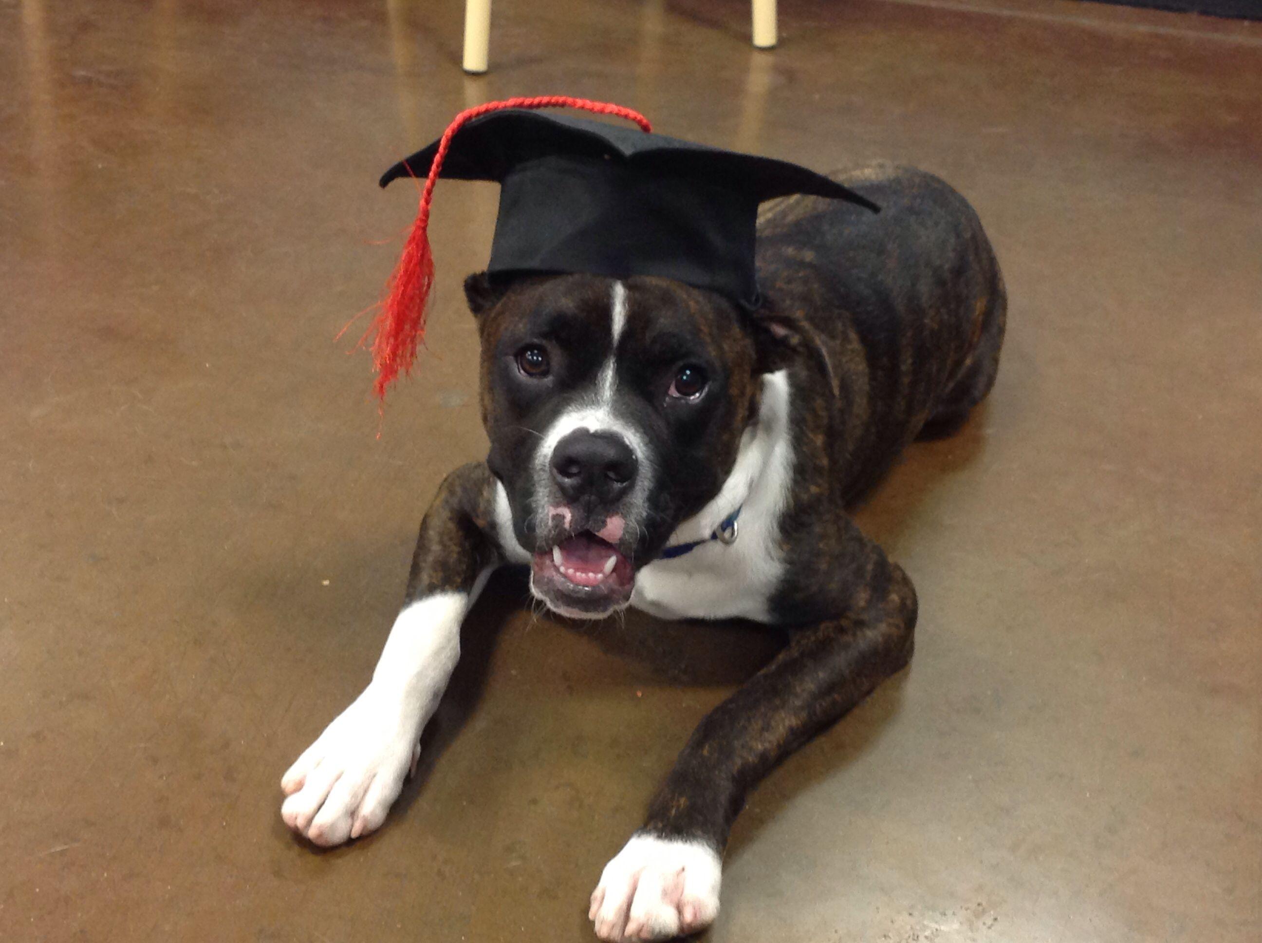 Tyty's puppy graduation