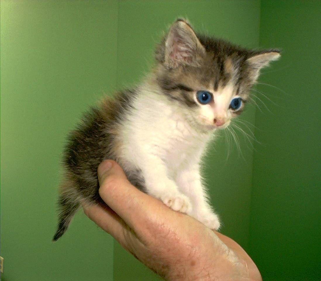 look how cute kittens kittens