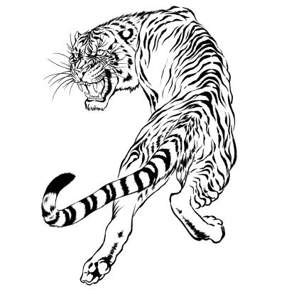 Black And White Drawing Of A Japanese Tiger Illustration Id451657621 414 414 Tiger Illustration Japanese Tiger Tiger Tattoo Design