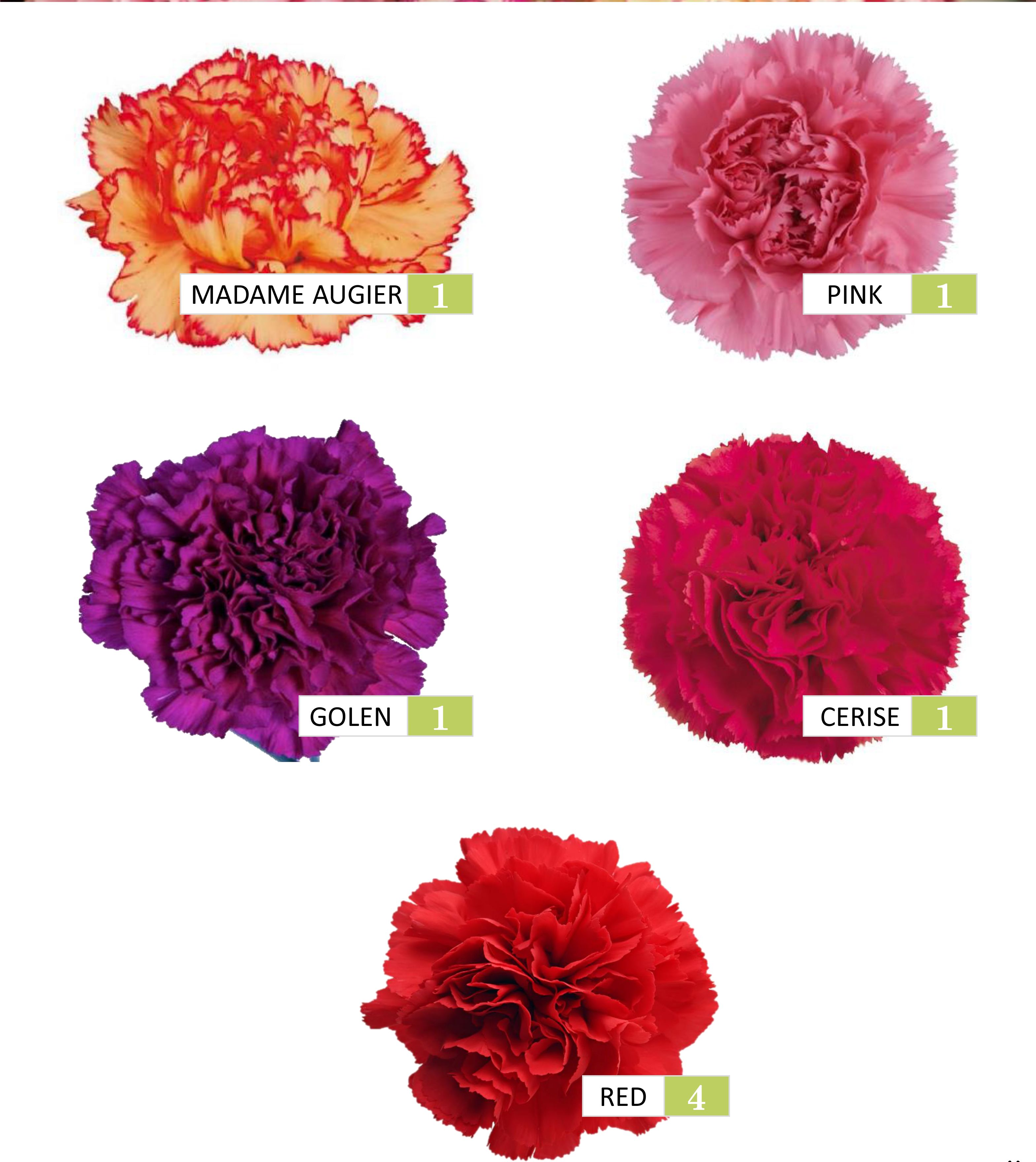 Pin By Tina Messina On Flower Colors Flower Chart Carnation Colors Colorful Flowers