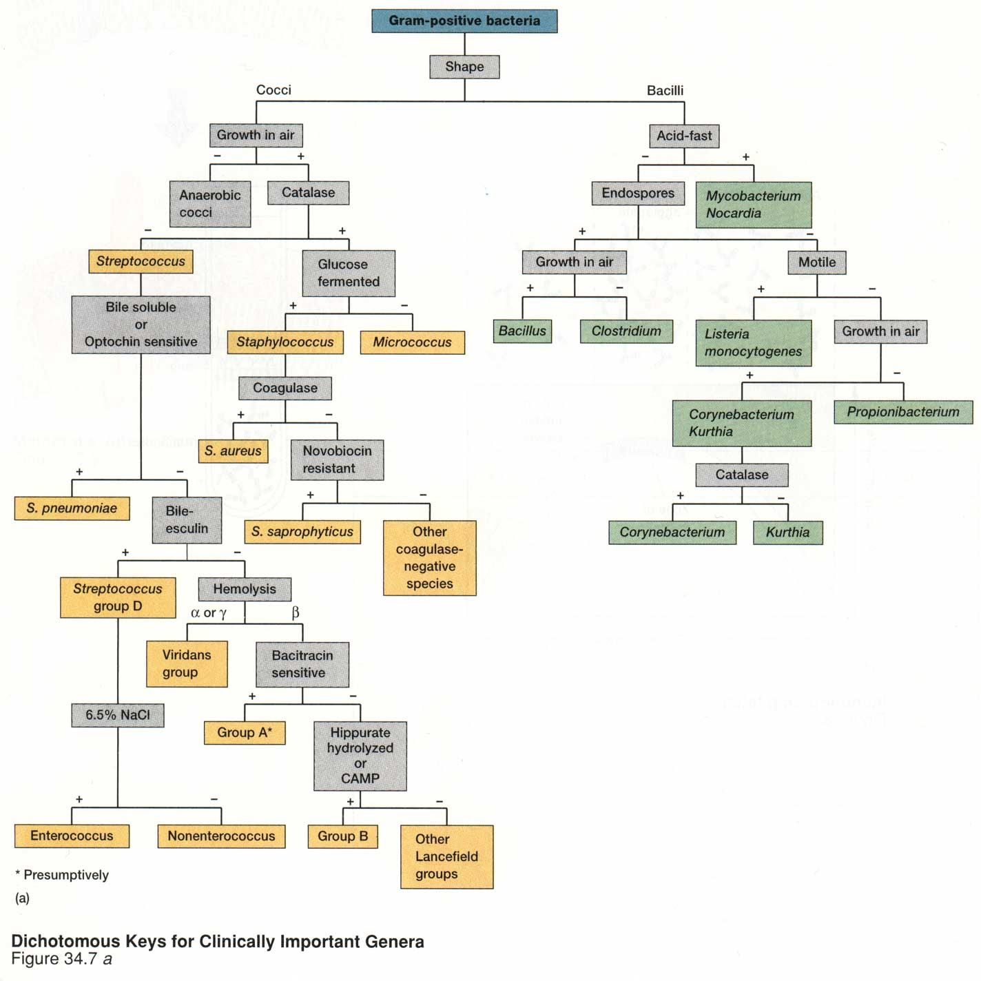 Bacteria chart best microbiology images on pinterest lab tech also solid datanet rh