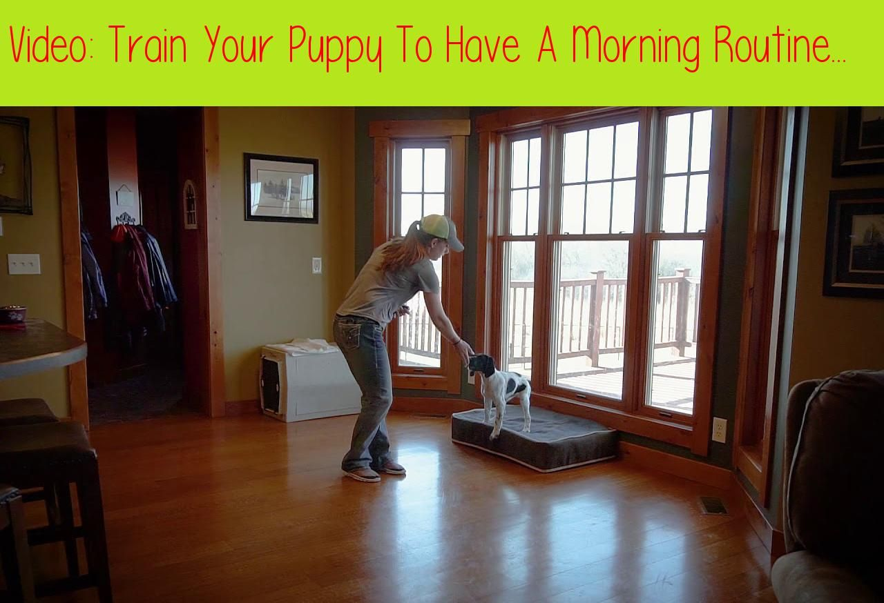 Train Your Puppy To Have A Morning Routine Upland Bird Dog