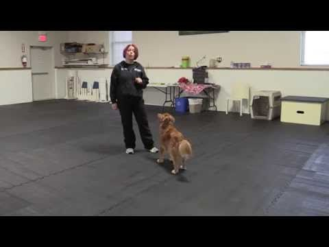 Trick Tuesday Trick Tutorials Teach Your Dog To Jump Into Your