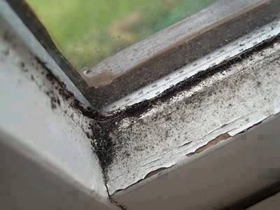 Got Some Nasty Black Mold Around Your Window Sills That Soap And Water Won T Cut Try This 1 Cup Distilled Vinegar 20 Drops Tea Tree Oil Mix In A Spray