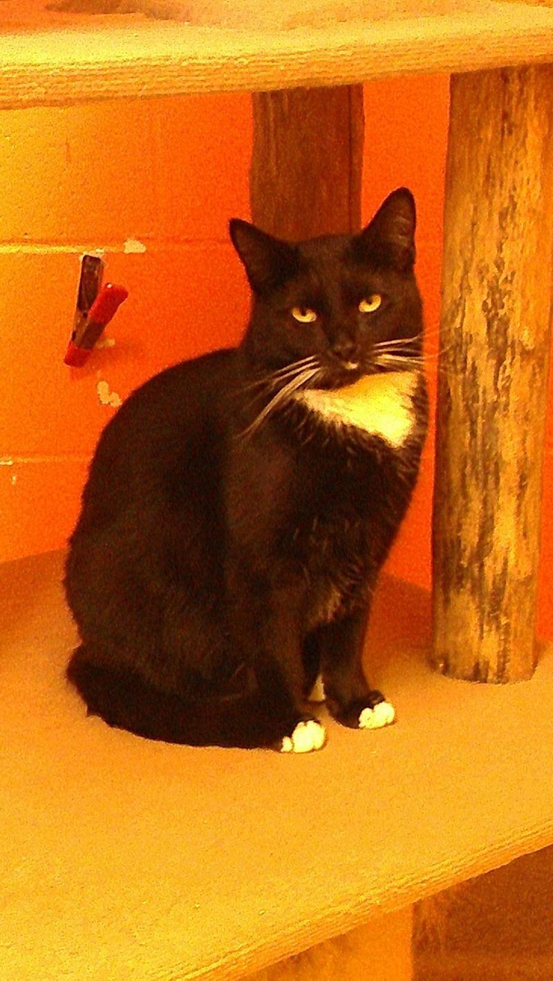 Adopt Mason on Pet adoption, Cats, Animal rescue