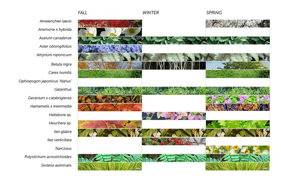 academic roof    garden    plant list new york By Raft