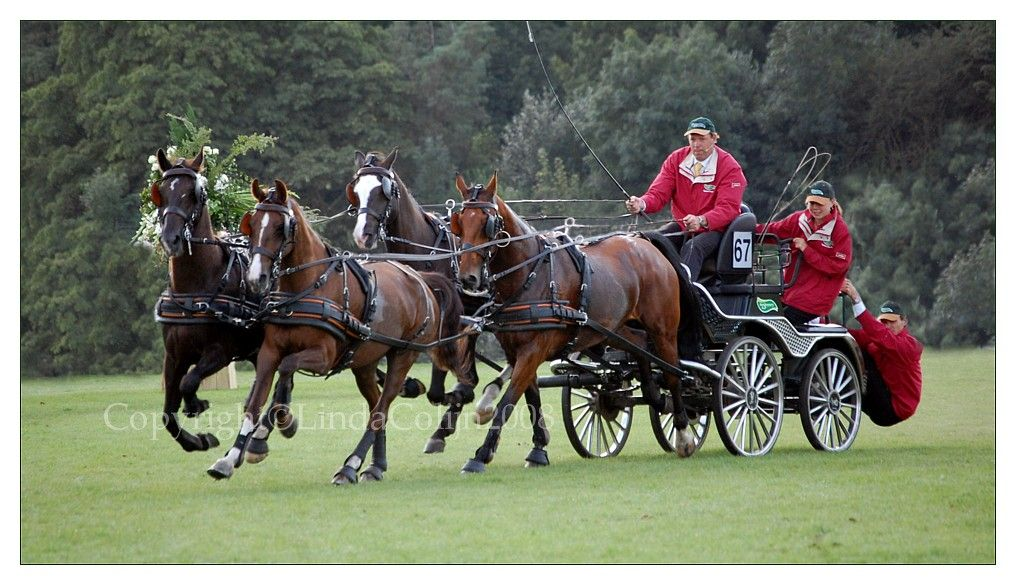 team of horses pulling a wagon (With images) | Horses ...
