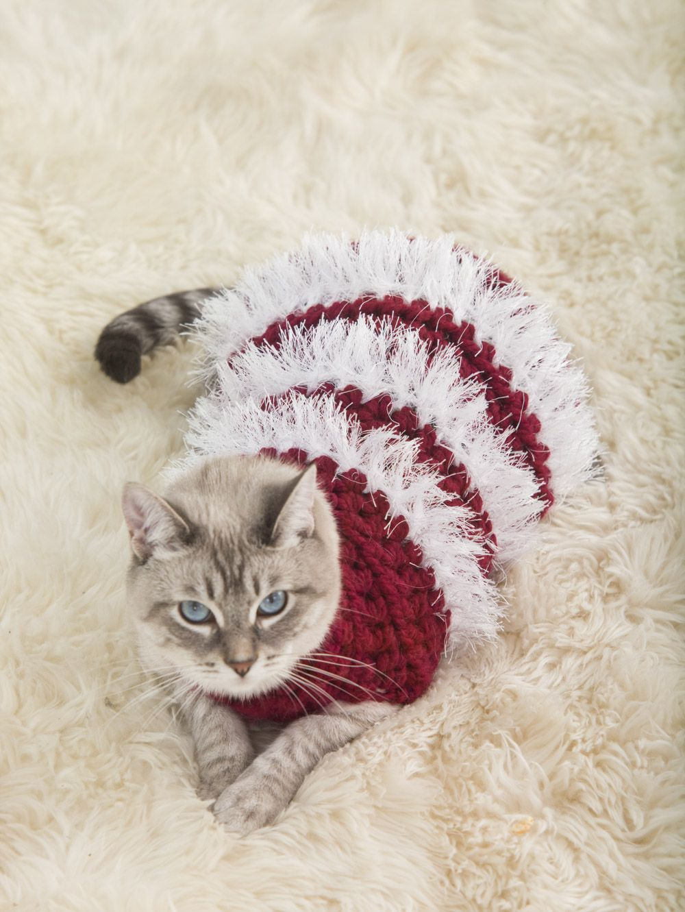 Crochet this cute holiday sweater for your pet pattern calls for to fit cats and small dogs holiday pet sweater free crochet pattern looks cute doesnt he bankloansurffo Images