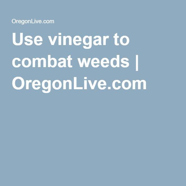 Use vinegar to combat weeds   OregonLive.com