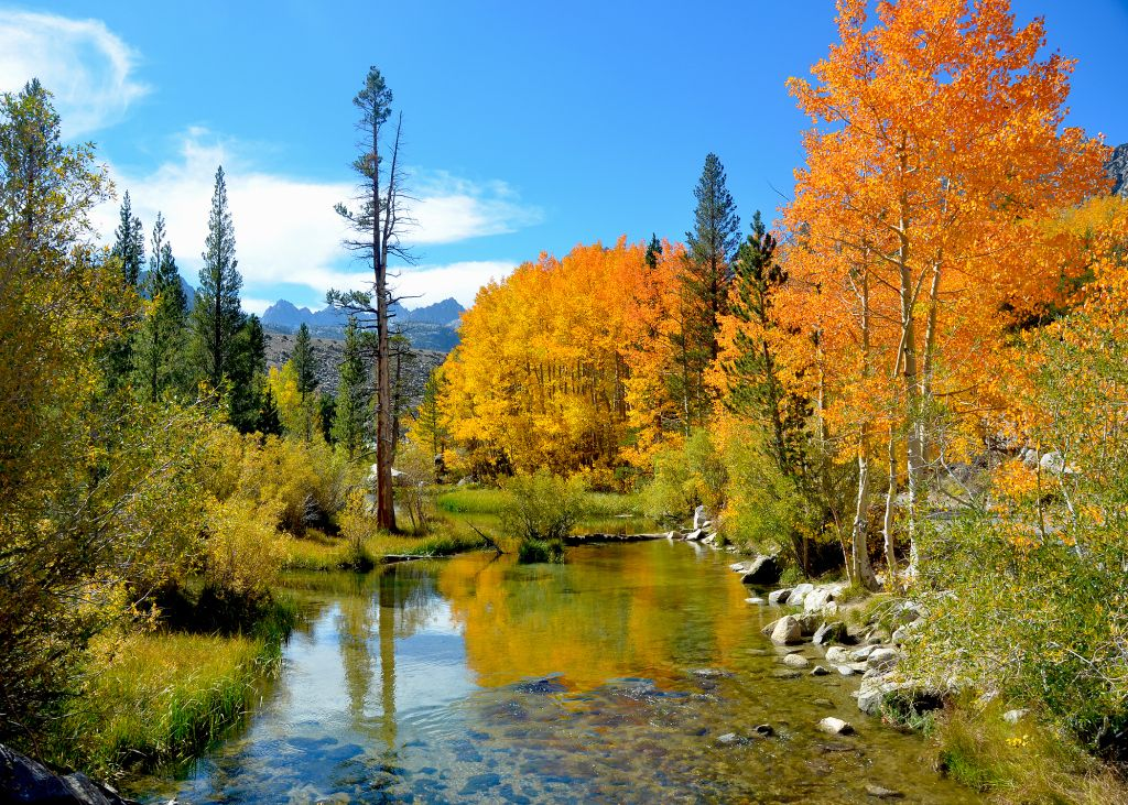 Best Bets For Fall Foliage In The Bay Area And Northern California Fall Foliage California Mountains California Camping