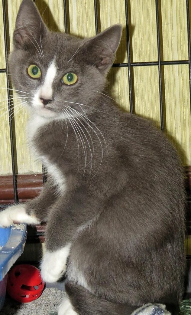"Adopt 6290 ""Simon"" on Animal shelter, Animals, Adoption"