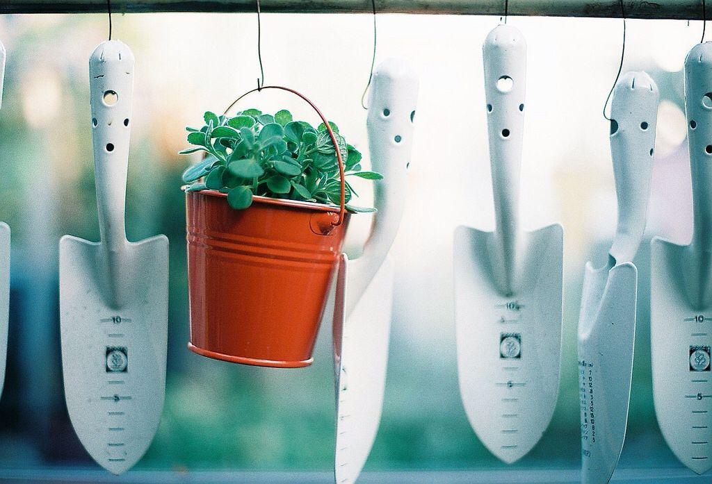 farmhouse ~ faRmHouSe dReaMs unFoldiNg Pinterest - pflanzen für wohnzimmer